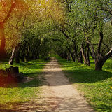 Paso a través de los árboles en parque de la ciudad Fotos de archivo