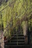 Pasos antiguos en matorrales Foto de archivo libre de regalías