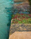 Pasos cubiertos en las algas verdes que llevan abajo en el mar/el agua Fotografía de archivo libre de regalías