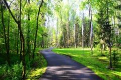 Pasos de la carretera de asfalto a través del bosque del abedul Foto de archivo libre de regalías