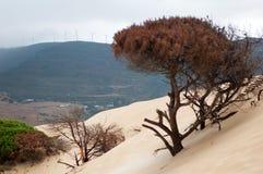 Pasos de la duna en un árbol contra el contexto de montañas con las turbinas de viento fotografía de archivo libre de regalías