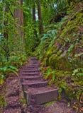 Pasos de la escalera a través de las secoyas Imagen de archivo