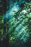 Pasos de la luz del sol a través de las hojas Fotografía de archivo