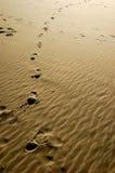 Pasos de la playa Foto de archivo libre de regalías