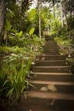 Pasos de la selva Imagen de archivo