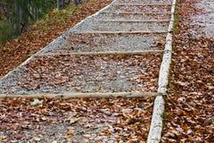 Pasos de madera del bosque en las hojas de otoño Foto de archivo