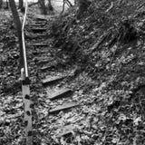 Pasos de madera en la tierra Escalera abandonada en el bosque Foto de archivo libre de regalías