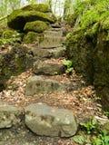 Pasos de piedra al bosque salvaje Imágenes de archivo libres de regalías