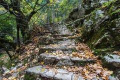 Pasos de piedra en bosque Fotografía de archivo libre de regalías