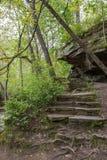 Pasos de piedra en bosque Imágenes de archivo libres de regalías