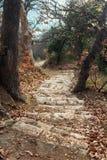 Pasos de piedra en el medio de un bosque pintoresco Imágenes de archivo libres de regalías