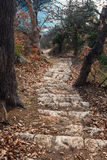 Pasos de piedra en el medio de un bosque pintoresco Foto de archivo libre de regalías