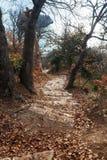 Pasos de piedra en el medio de un bosque pintoresco Fotografía de archivo