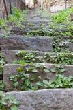 Pasos de piedra overgrown en Riomaggiore Italia imagen de archivo