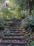 Pasos de progresión del bosque foto de archivo