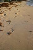 Pasos de progresión en la playa Imágenes de archivo libres de regalías