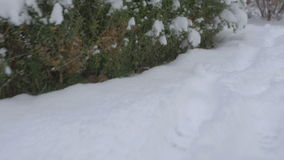 Pasos de siguiente en la nieve fresca 4K almacen de video