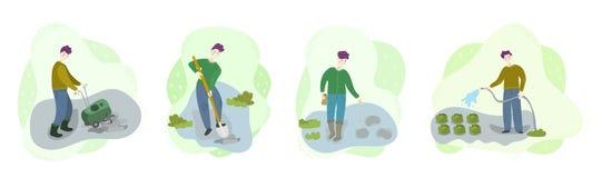 Pasos de verduras crecientes org?nicas en campo Los hombres cultivan el suelo, cavan el agujero, semillas de la cerda, regando Tr libre illustration