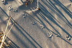Pasos en arena en la playa Imágenes de archivo libres de regalías