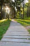Pasos en bosque Imagen de archivo libre de regalías