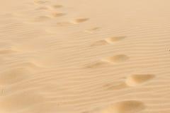 Pasos en la arena caliente seca. Fotografía de archivo