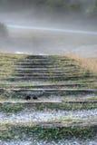 Pasos en la niebla Fotos de archivo