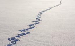 Pasos en la nieve Foto de archivo