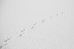 Pasos en la nieve Fotos de archivo libres de regalías