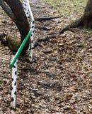 Pasos en la tierra y las verjas pintadas Hojas el año pasado caidas Escaleras en el bosque de la primavera Fotos de archivo