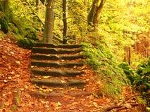 Pasos pedregosos en el bosque, sendero turístico Los troncos de oro del bramido curvaron pasos de la piedra arenisca Foto de archivo libre de regalías