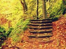 Pasos pedregosos en el bosque, sendero turístico Los troncos de oro del bramido curvaron pasos de la piedra arenisca Fotografía de archivo libre de regalías