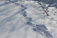 Pasos, pistas humanas en la nieve Fotos de archivo libres de regalías