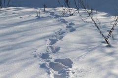 Pasos, pistas humanas en la nieve Foto de archivo