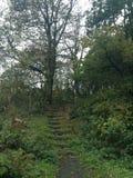 Pasos que ascienden al centro del bosque Imagen de archivo
