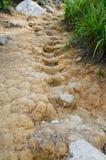 Pasos secados del fango Imagen de archivo
