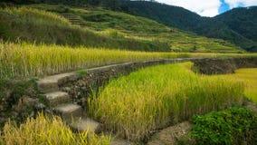Pasos y trayectoria del cemento que llevan a través de las terrazas del arroz de Maligcong Imagenes de archivo