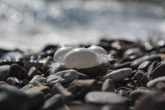 Pasqua al mare Fotografie Stock