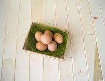 pasqua Bugia delle uova nel contenitore per le uova Erba verde Fotografie Stock
