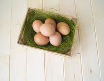pasqua Bugia delle uova nel contenitore per le uova Erba verde Immagine Stock Libera da Diritti