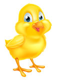 Pasqua Chick Baby Chicken Immagini Stock