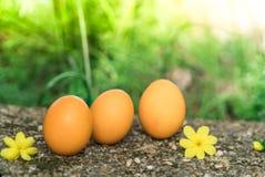 Pasqua domenica, pasqua felice, uova di Pasqua variopinte cerca gli ambiti di provenienza di concetto di pasqua delle decorazioni Fotografia Stock