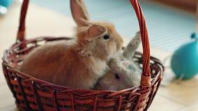 Pasqua felice, coniglietto in un canestro video d archivio