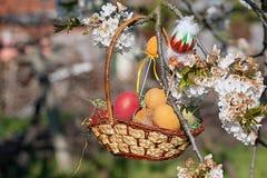 Pasqua felice Uova di Pasqua Variopinte in un cestino immagine stock libera da diritti