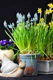 Fiori di Pasqua e una lumaca Fotografia Stock