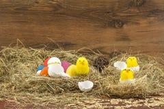 Pasqua ha colorato le uova nel fieno Piccolo pulcino neonato Fotografia Stock