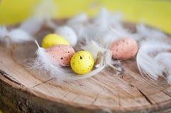 Pasqua, uova colorate, giallo, bianco, albero bianco, fondo bianco, feathersa, pollo eggs, uova di quaglia Fotografie Stock