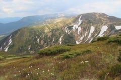Pasque-fleurs blanches contre de belles crêtes de montagnes Photos libres de droits