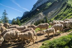 Pass of ayes,sain pierre de chartreuse,isere,france. Park regional de chartreuse en isere royalty free stock images