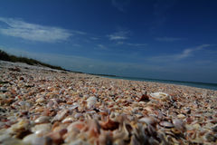 Pass-a-grille beach. Low angle of millions of sea shells lined along the beach of pass-a-grille Florida Stock Images