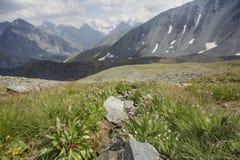 Pass Karaturek. Beluha Mountain, Altai Royalty Free Stock Images